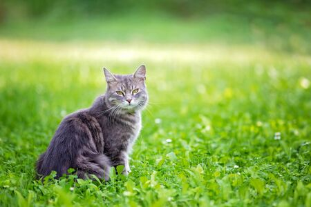 Sweet kitten in a grass, looking at camera, sunny day