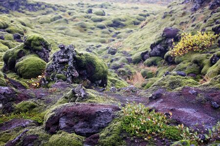 Beautiful landscape with wooly moss on a rainy day in Iceland, autumntime Imagens