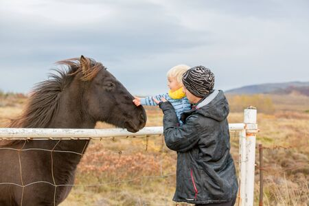 Beautiful toddler child with dad, fondle horses in the nature, early in the morning on a windy autumn day in Iceland