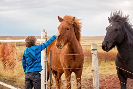Beautiful child and horses in the nature, early in the morning on a windy autumn day in Iceland 写真素材 - 131929527