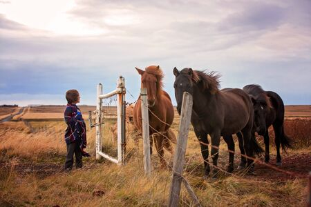 Beautiful child and horses in the nature, early in the morning on a windy autumn day in Iceland 写真素材 - 131929431