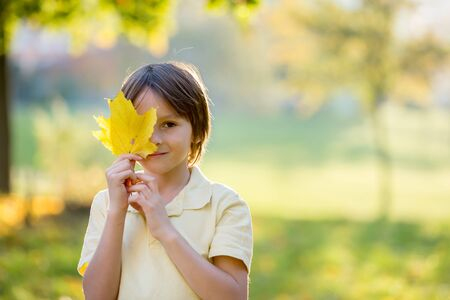 Beautiful preschool boy, holding big leaf in front of his face, looking at camera, sunny autumn day in the park on sunset
