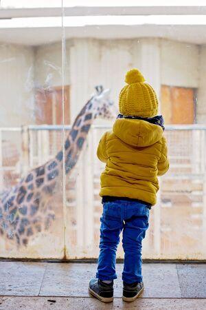 Little toddler boy, watching giraffe in the zoo Stockfoto - 133461680
