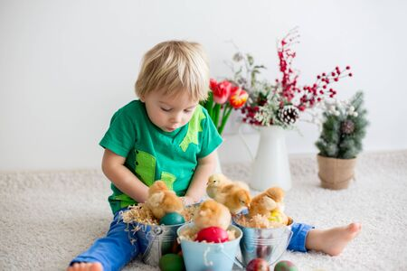 Sweet toddle blond boy, child, playing with cute little newborn chicks in a bucket and easter eggs at home