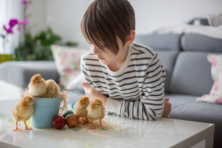 Sweet school child, playing with cute little newborn chicks in a bucket and easter at home eggs
