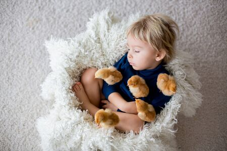 Cute blond toddler boy, sleeping with newborn chicks, hugging them tenderly Stock Photo