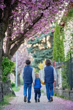 Children, playing on the street with blooming pink cherry trees on sunset, riding bikes