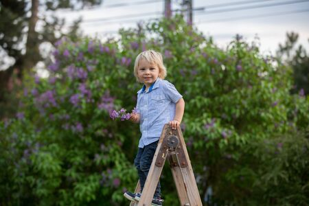 Cute child, toddler boy, standing on ladder in garden, hodling lilac. looking thoughfully