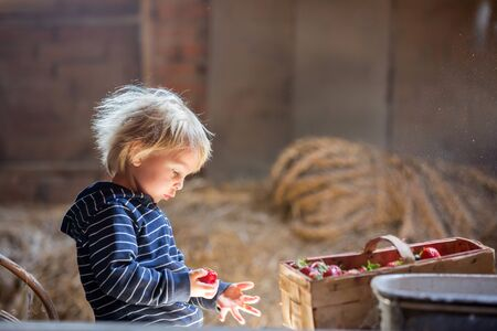 Little toddler blond boy, reading a book in the attic, nice atmosphere, strawberries next to him Фото со стока - 150511643