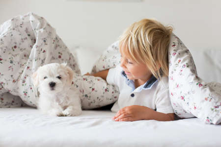Cute little blond child, toddler boy, reading book with white puppy maltese dog at home Фото со стока