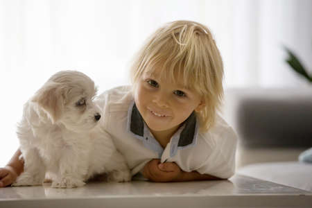 Cute little blond child, toddler boy, playing with white puppy maltese dog at home