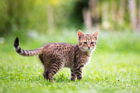 Little kitten in garden, playing summertime Фото со стока