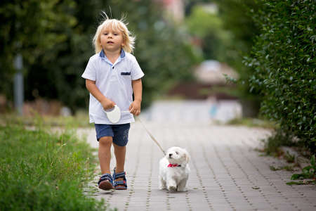 Cute toddler child with white maltese puppy, playing in the park, walking and riding tricycle Фото со стока