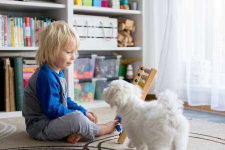 Cute preschool child, playing with abacus at home, little pet dog playing around him Standard-Bild