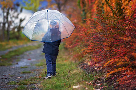 Sweet toddler blond child, cute boy, playing in autumn park with colofrul trees and bushes on a rainy day Stock fotó