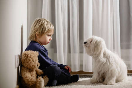 Angry little toddler child, blond boy, sitting in corner with teddy bear and his dog friend, punished for mischief 版權商用圖片
