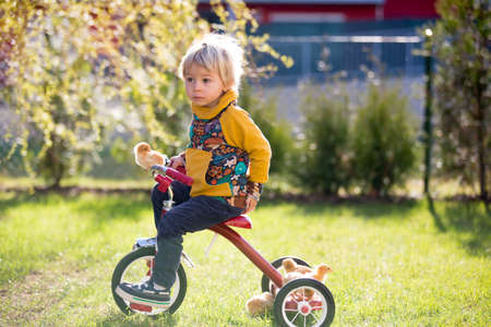 Sweet cute blond child, toddler boy, riding tricycle with little chicks in garden, playing with baby chickens Standard-Bild