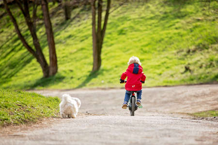 Little boy, learning how to ride a bike in the park, springtime Фото со стока