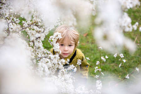 Cute blond toddler child, boy, running around blooming yellow bush, spring time, while snowing, unusual spring weather with snow Фото со стока