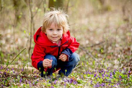 Little child, boy, gathering wild purple spring flowers in the forest Standard-Bild