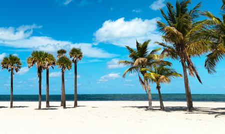 palmier: Groupe de palmiers � Florida