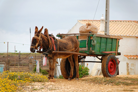 cart: Donkey cart in the countryside in Portugal