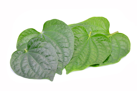 Wildbetal Leafbush or Piper sarmentosum Roxb isolated on white. Фото со стока