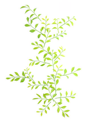 The leaves are lined together beautifully on a white background.