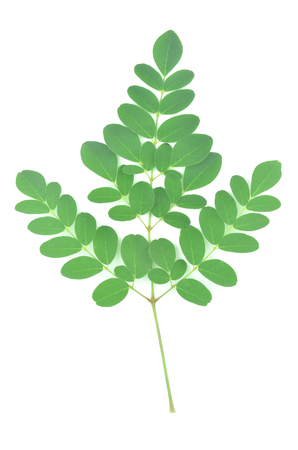 Moringa leaves are green herbs placed on a white background.