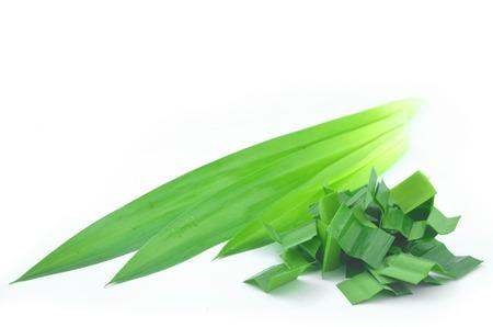 Fresh green pandanus fragrant on a white background.