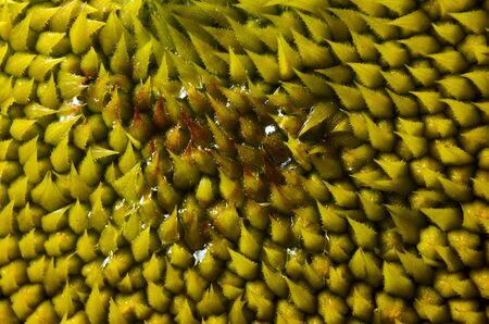 Sharp spiky sunflowers pollen  taken at close range. Фото со стока