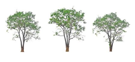 Large tree in different view on white background.