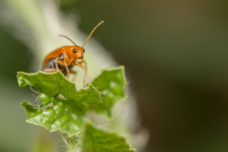 Ladybug sitting on the plant with water dropSelection focus only on some points in the image. Stock Photo