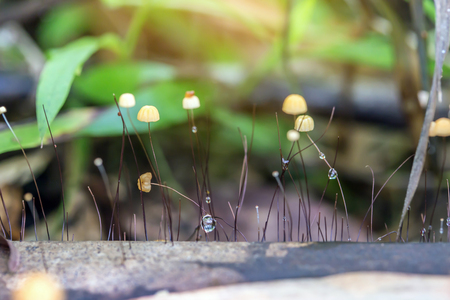 Mushrooms in forest, mushrooms are born in the wild nature.