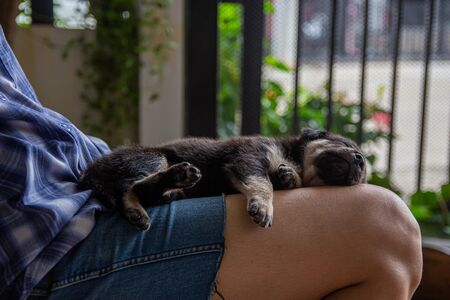 Puppy sleeps with the owner Stock fotó
