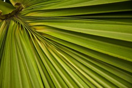 background of a palm leaf photo
