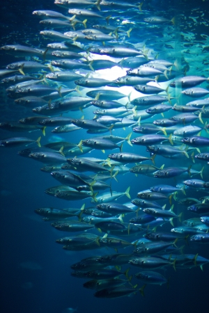 school of fish in aquarium in Stralsund, Germany photo