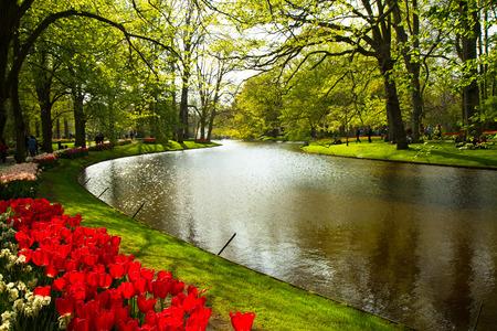red tulip: fields of tulips in Keukenhof park in Netherlands