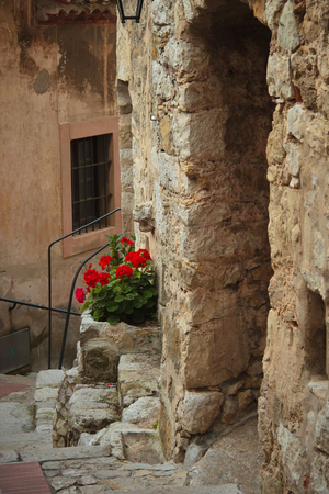 protected plant: entrance to an old house, Eze, France Stock Photo