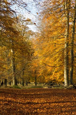 Autumn in a forest north of Copenhagen, Denmark Archivio Fotografico
