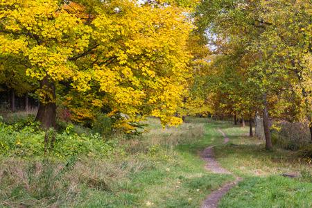 beautiful autumn in a park north of Copenhagen