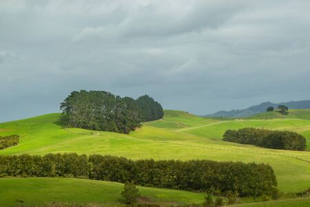 View of green hills of North island of New Zealand