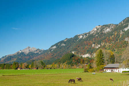 Beautiful fields and meadows of Bavarian Alps, Germany