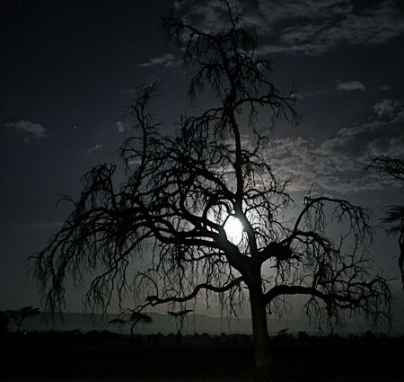 rising dead: spooky tree on African plains in under full moon