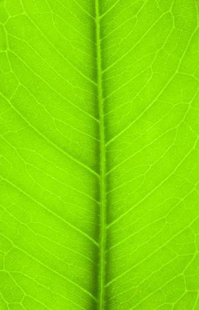 green vegetation: green Leaf close up background