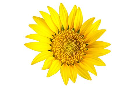 Bright yellow sun flower isolated on white background Stock Photo - 6996260