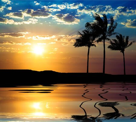 Beautiful sunet with palm tree at summer time photo