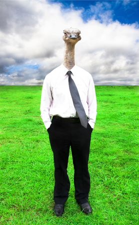 businessman with Ostrich head Imagens