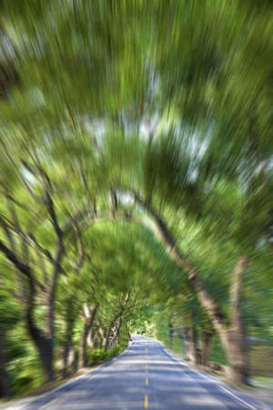 Driving through the Green Forest and road in motion blur Stock Photo - 8375965