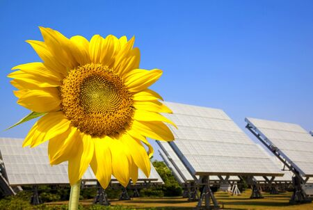 Beautiful sunflower and solar panel and power plant.Alternative energy concept  photo
